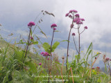 kwt_2011-07-25_040.jpg