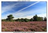 Hoogmoerheide Merksplas / Turnhout