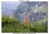 KWT_2012-07-04_300.jpg