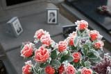 TURNHOUT Het 'oude' kerkhof - The 'old' cemetary