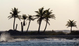 Palmiers à contrejour