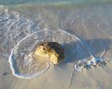 Le rocher récif
