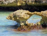 arche de la barrière de corail