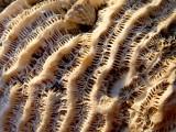 corail de très près