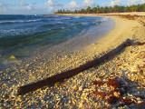La plage au tronc