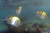 essai de plongée sous-marine