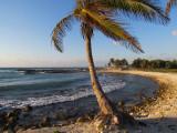 le palmier planté là