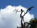arbre perchoir