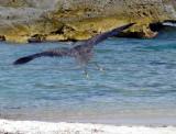 décollage sur la plage