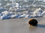 la noix de coco sur la plage