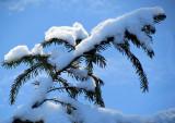porteuse de neige