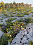végétation sur récif de corail