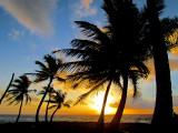 ballade des palmiers
