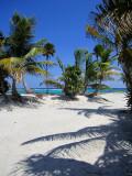 palmier et sable chaud
