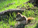 Un écureuil attentif