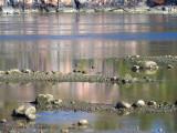 reflets sur le Saguenay