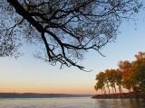 l'arbre dans le ciel