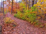 Là ou va l'automne