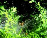 L'araignée sur fond vert