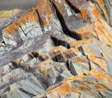 composition aux lichens