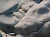 Hippopotame de pierre