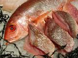 le poisson sur la glace