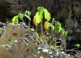 Végétation à contrejour