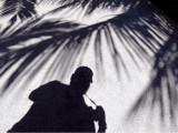 autoportrait sous les palmiers