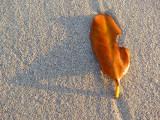 feuille sur sable