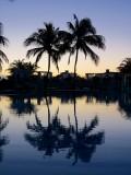 deux palmiers et leur reflet