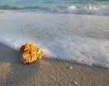 écume de plage