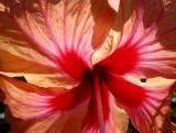 à l'ombre de la fleur