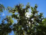 Soleil dans le haut des arbres