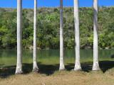 Prison d'arbres