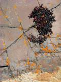 algues sèches