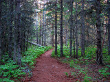 la forêt mortifiée