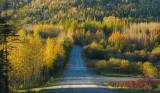 la route à travers le parc