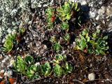 plantes grasses au Bic