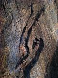 antilope de pierre