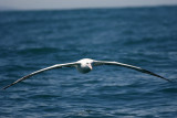 new_zealand_seabirds_2007