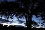 27th October 2011  Milky blue