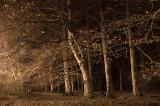 14th November 2011  November trees