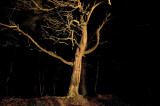 21st January 2012 in the woods at night in a gale