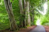 8th July 2012  verdant