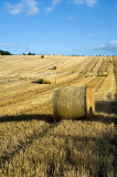16th August 2012  bales are out