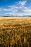 21st August 2012  crops