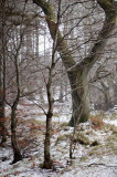 3rd January 2008  winter in the woods