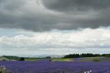 Lavender & Clouds