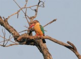 Pench Tiger Reserve - 17 march 2011