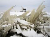 8 february 2012 - IJsselmeer & Landsmeer